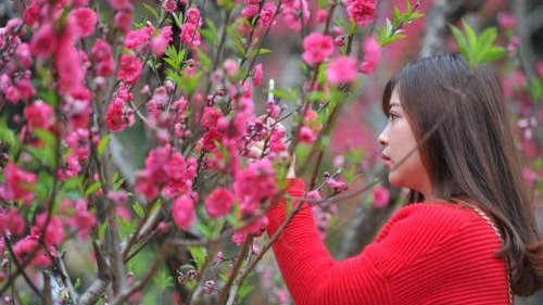塔羅占卜:今年是否會有好桃花出現?